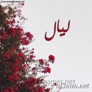 صوراسم-ليال،-خلفيات-اسم-ليال،-رمزيات-اسم-ليال_00245 صور اسم ليال ، خلفيات اسم ليال ، رمزيات اسم ليال